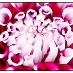 Flowers by John Charlton Photography