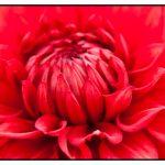 Photograph of a flower by Birmingham based Wedding and Portrait photographer - John Charlton