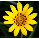 Photography of a Daisy by Birmingham based John Charlton Photography
