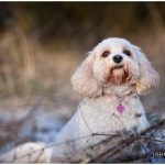 Birmingham Pet Photography